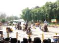 云南自驾游之精彩绝伦的大象表演
