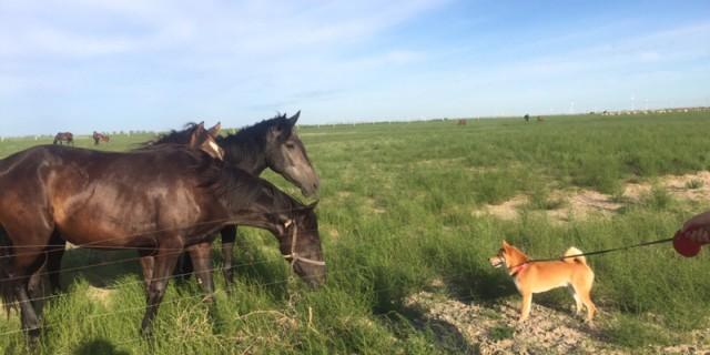 夏天夏朗  内蒙古乌拉盖草原之旅
