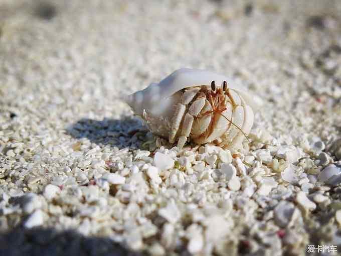魂牵梦绕,流连忘返--马尔代夫库达富士蜜月之行玩法游戏绳子视频图片