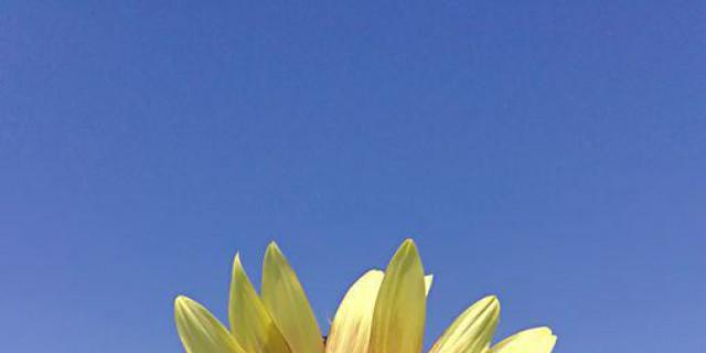 向前向前向前!我们的队伍向太阳――百亩葵花观赏记