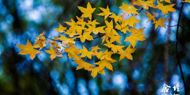 念坛公园的深秋情怀