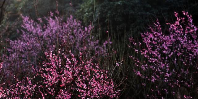 一个假期的下雨终于有时间有机会看梅花。。。。