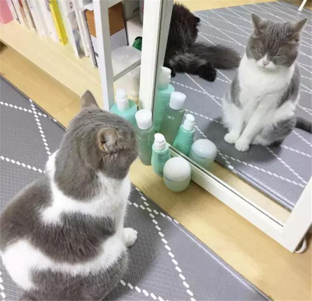 > 听说这是最完美的猫咪侧脸?猫咪其实也有黄金比例!