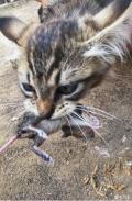 """喂养两年的流浪猫,过年期间不断送出""""大礼"""",主人搞得一脸懵逼"""