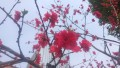 【寻春之旅】广场赏花!