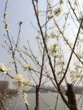 #发现美好生活另一面#去津门感受春天的津味儿