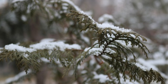 【爱分享】冬日泉城公园游记