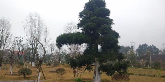 【寻春之旅】华蓉湿地公园