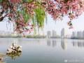 海棠映衬下的城市光影,你喜欢吗?~~~
