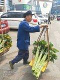 【途观大队】云南斗南花卉市场随手拍