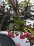 春暖花开,拥抱春天,发现宝骏730