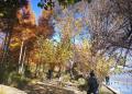 洱海的公园充满魅力
