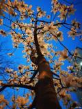 美在杭州,阳春三月杭州随拍