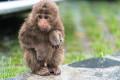 【多图慎入】清明假期喇叭河赏春雪杜鹃,顺便喂了猴子