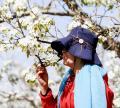 【实拍】【2018季春初夏】去北京房山贾河村赏梨花闻花儿香