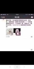 求到杭州机票,找狗
