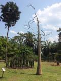 神奇的植物园