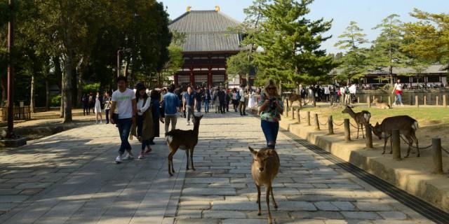 奈良――一座野鹿四处溜达的文化古城!