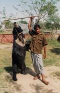 印度一的哥丢下乘客 去和路边的熊自拍 不幸被撕咬身亡