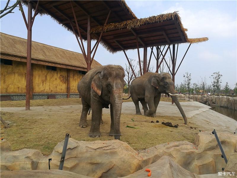 国庆假期最后一天游南通森林野生动物园