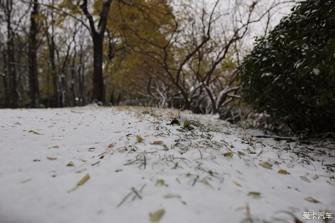 形容春天夜晚雪的图片