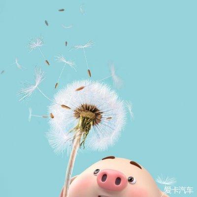 2019猪年微信可爱卡通头像