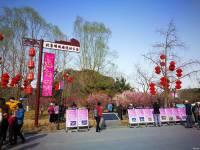 北京明城墙公园梅花节,春回大地今最高二十度。