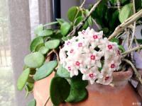 我家的花花草草第十季-花能养心