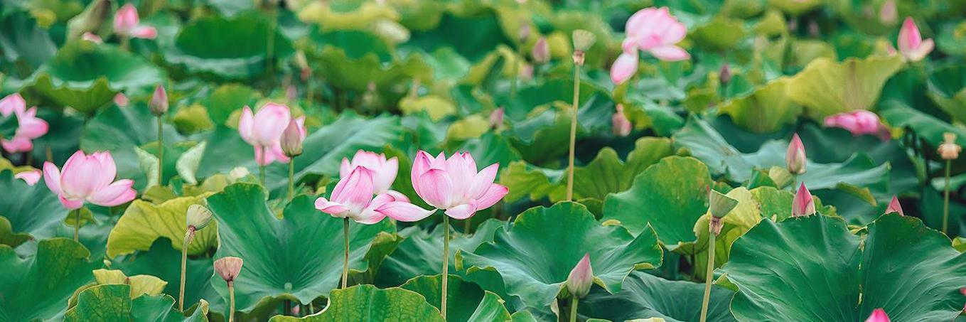【司马讲故事】行走于滇东南,怀念属于这个夏天的记忆
