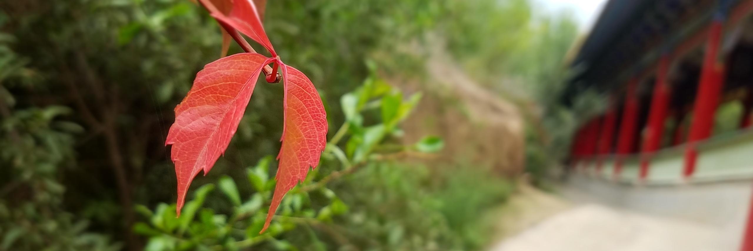 秋意兰州五泉山的美景色彩----橙红