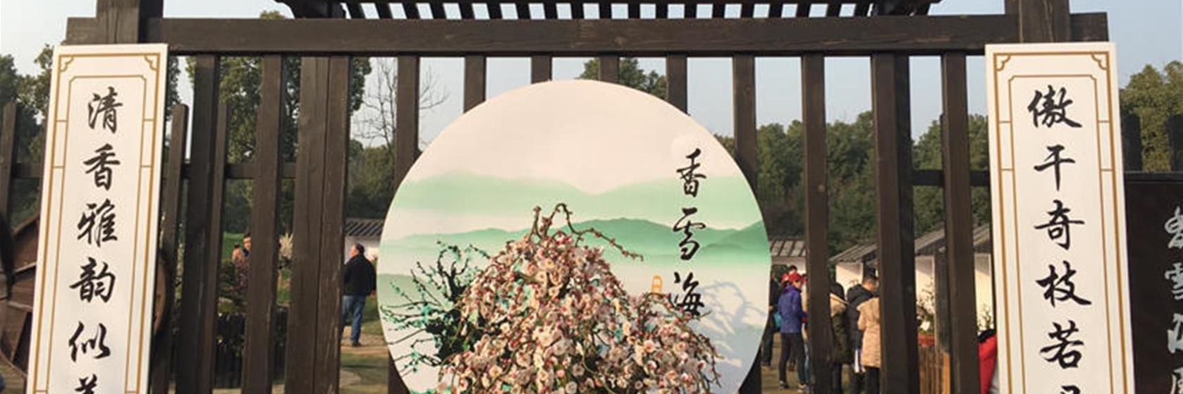 風吹梅蕊鬧,雨細杏花香,于蘇州追尋春的魅影!