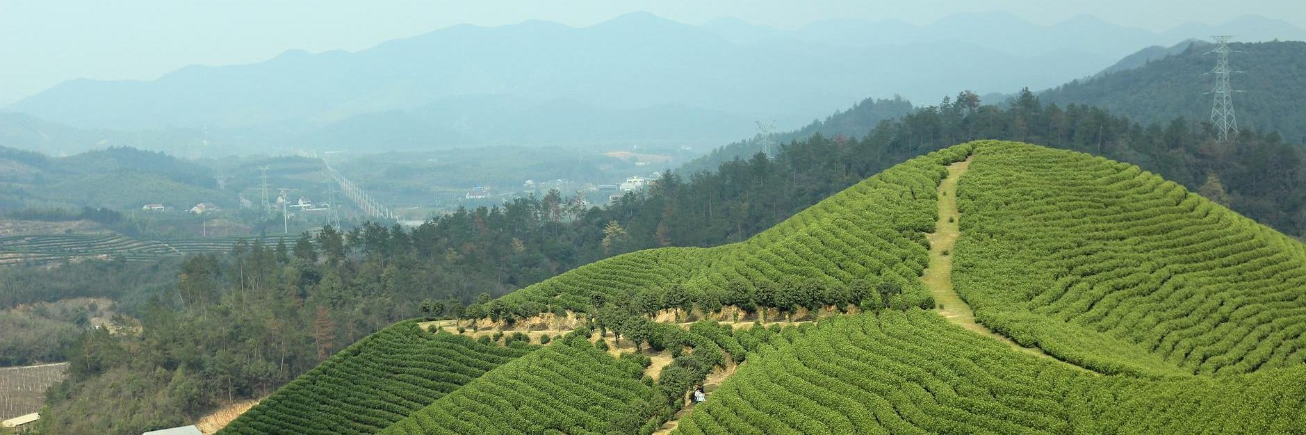 不负春光,来到天然氧吧驾云山,你喜欢的山茶花和忘忧草这里都有