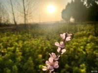 春暖花开-欣赏下油菜花地的大汉