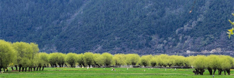 高原上的江南——林芝,当它桃花盛开时,称得上中国醉美的春天!