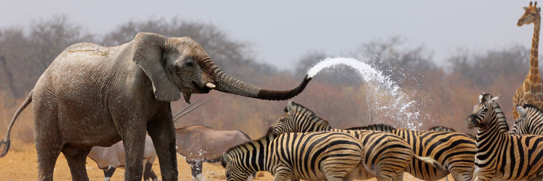 纳米比亚的狂野之旅,野生动物的最后乐园与神秘的原始部落(上)