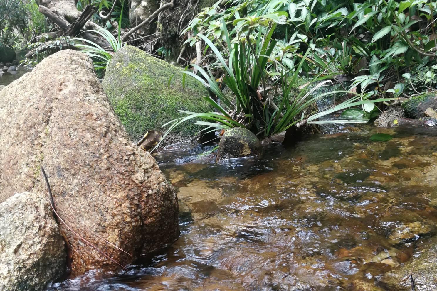热带雨林听水--海南吊罗山国家森林公园