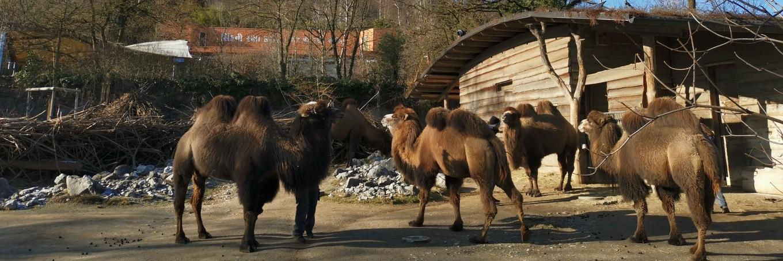 在冬日探訪瑞士