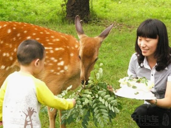"""免费抢""""十一""""黄金周武汉九峰森林动物园门票(22楼公布中奖名单)"""