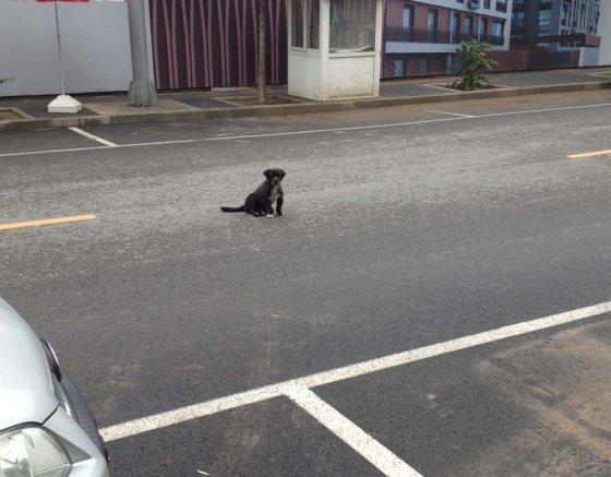 开车在路上请避让流浪动物.