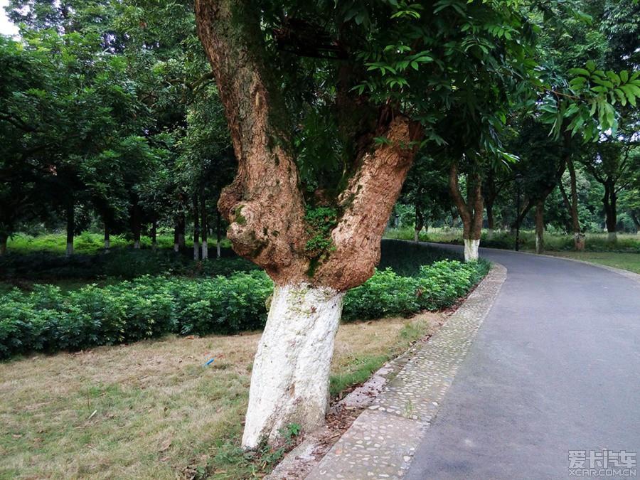 桂圆树版中国好声音