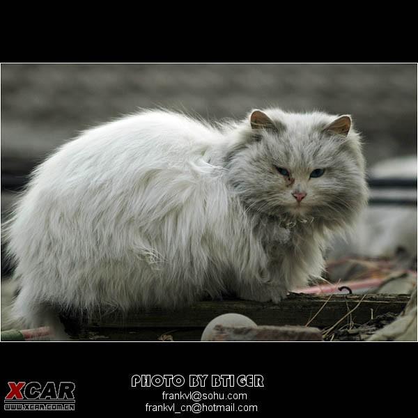 【精华】过冬的流浪猫/野猫(2005-2006)