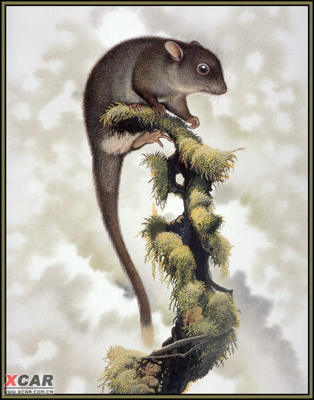 世界灭绝动物画集 2