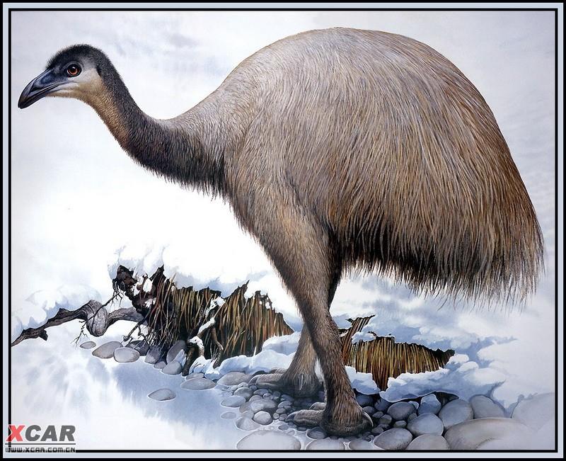 世界灭绝动物画集