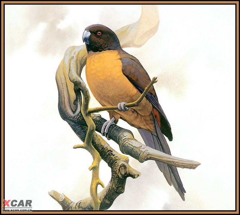 世界灭绝动物画集_robsiqi