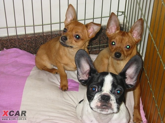犬瘟热的最佳治疗方法