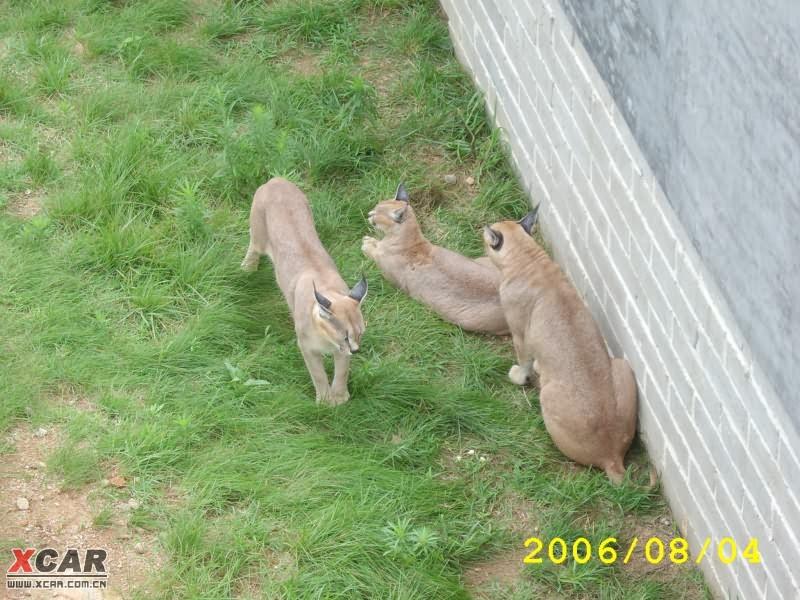 【精华】烟台金沙滩及荣城野生动物园