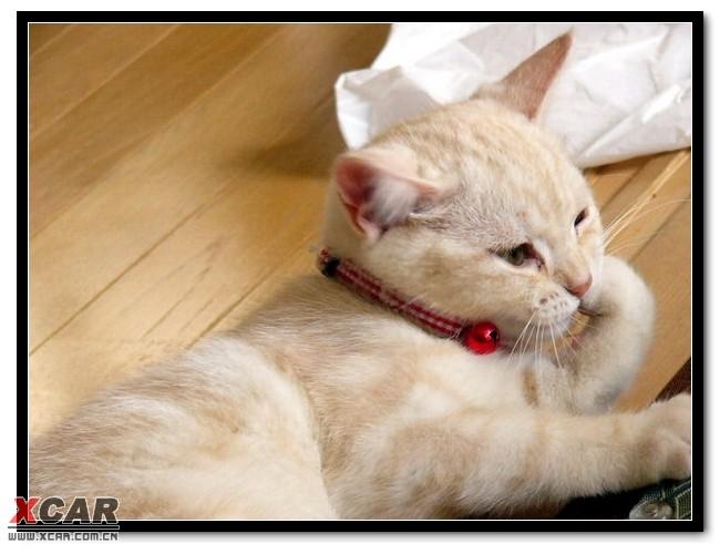"""可爱的猫咪 ※※ ----献给""""胖子猫""""和""""傻大猫"""""""