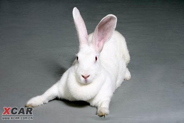 看看我家胖兔兔!精华