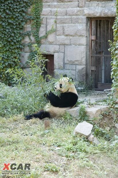北京动物园的熊猫! 附件: 回复本楼