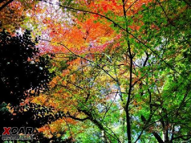 秋天的美景